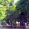 Затварят част от централния булевард на Пловдив