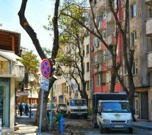 """ОП """"Градини и паркове"""" оформя дърветата в зоната на Водния проект"""