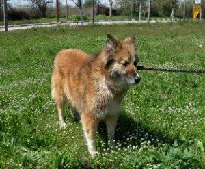 Пловдивчани могат да разхождат домашните си любимци в парка