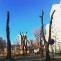 Пловдивчани не могат да познаят улицата си, след санитарна сеч