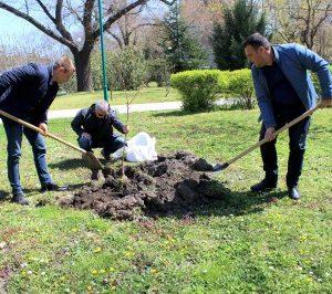 """С японски вишни и кълбовиден ясен разкрасиха два парка в район """"Южен"""""""