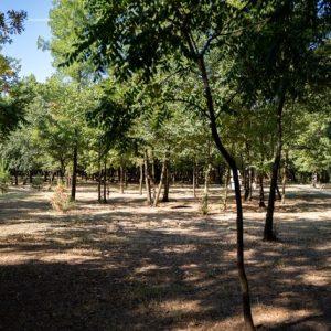 """Мисия """"Лаута"""" превръща в кауза чистотата на парка"""